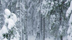 Winter landscape.W stock footage