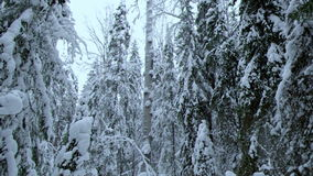 Winter landscape.W stock video