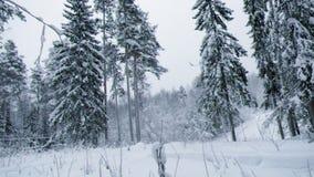 Winter landscape.W stock video footage