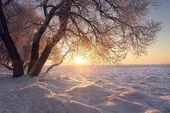 Winter landscape. Warm sunlight at winter at sunset. Frost and fog. Tree on textured snow in sun. Christmas background. Amazing winter nature. Hoarfrost on royalty free stock photography