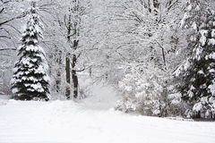 Winter landscape. White winter landscape in Canada with trees covered in snow Royalty Free Stock Image