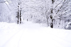 Winter landscape. White winter landscape in Canada with trees covered in snow Royalty Free Stock Images