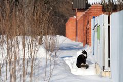 Winter landscape with white snow and black cat on snow royalty free stock images