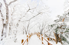 Winter landscape white snow of Mountain in Korea. Stock Images