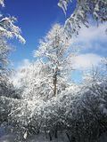 Winter landscape with trees, snow and blue sky. Winter landscape with white trees, snow and blue sky stock photography