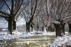 Winter landscape with willows. The frozen stream facing the old willow covered with snow on a sunny winter day stock photos