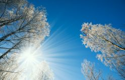 Winter landscape -winter forest nature under bright sunlight with frosty trees. royalty free stock photography