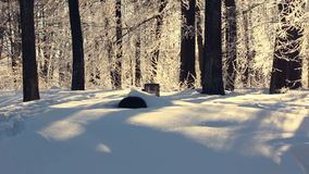 Winter landscape. Winter forest in sunlight. Winter river in park. Winter nature stock video footage