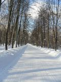 Winter landscape. Park trees snow stock photography