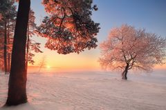Winter landscape. Winter nature in park. Beautiful winter sunset with frosty trees illuminated by pink sunlight. Christmas background. Christmas evening with stock image