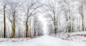 Winter landscape. Winter road and trees covered with snow Royalty Free Stock Image