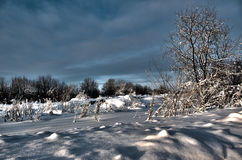 Winter landscape.Winter scene Stock Image