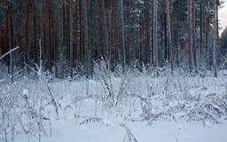 Winter landscape.Winter scene Stock Photos
