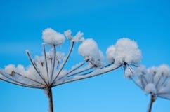Winter scene .Frozenned flower Stock Photos