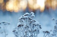 Winter landscape.Winter scene Royalty Free Stock Photography