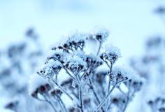 Winter landscape.Winter scene Stock Photography