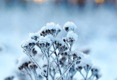 Winter landscape.Winter scene Royalty Free Stock Photo