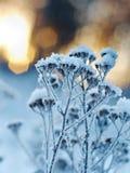 Winter landscape.Winter scene Stock Images