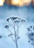 Winter landscape.Winter scene Royalty Free Stock Photos