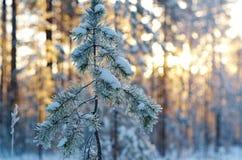 Winter landscape .Winter scene Stock Image
