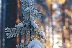 Winter landscape .Winter scene Stock Photo