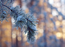 Winter landscape .Winter scene Royalty Free Stock Images