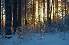 Winter landscape .Winter scene Royalty Free Stock Image