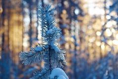 Winter landscape .Winter scene Stock Photos