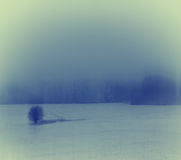 Free Winter Landscape With A Lonely Tree Stock Photo - 37444970