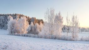 Free Winter Landscape With Frosty Trees Illuminated By Warm Sunlight. Christmas Background. Winter Nature. Frosty Morning Royalty Free Stock Photo - 125734855