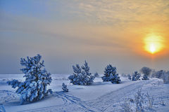 Free Winter Landscape With Small Pines. Stock Photos - 29484643