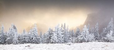 Winter Landscape With Snowy Fir Trees In The Mountains Stock Photography