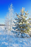Winter Landscape With Trees Royalty Free Stock Photography