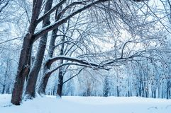 Winter landscape - wonderland winter forest. Snowy winter scene Stock Images