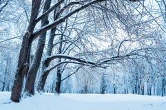 Winter landscape - wonderland winter forest. Snowy winter scene. Winter landscape - wonderland winter forest with forest trees covered with frost. Snowy winter Stock Images