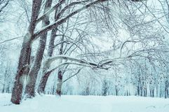 Winter landscape. Wonderland forest with winter forest trees covering with frosy and snow. Snowy winter scene stock images