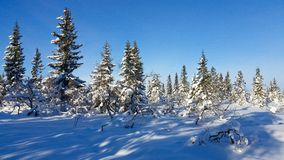 Winter landscape. Winter wonderland in Hedmark county Norway. Winter landscape. Winter wonderland. The ground is covered with the white gold. Hedmark county royalty free stock images