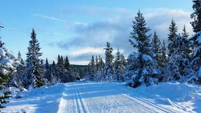 Winter landscape. Winter wonderland in Hedmark county Norway. Winter landscape. Winter wonderland. The ground is covered with the white gold. Hedmark county stock image