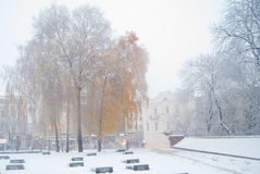 Winter landscape. Yellow birch leaves snowfall in the city Stock Image