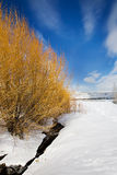 Winter Landscape with Yellow Bushes, Utah Stock Photos