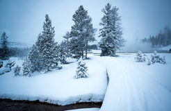 Winter landscape, Yellowstone Stock Photography