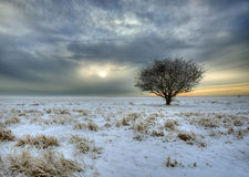 Winter landscapes. A large natural area with a lone tree one winter day with a light mist in the background Royalty Free Stock Image