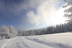 Winter landscapes Stock Image
