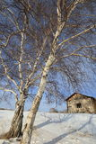 Winter Landscapes, Royalty Free Stock Image
