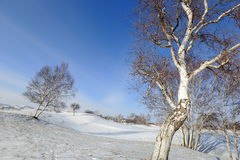 Winter Landscapes, Royalty Free Stock Photo