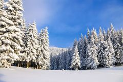 Winter landscapes with fair trees under the snow. Scenery for the tourists. Christmas holidays Stock Photo