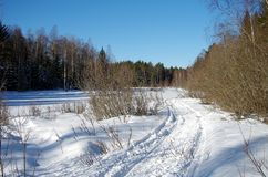 Winter landscapes in the forest. On a sunny and cold morning in Dalarna,Sweden royalty free stock photo