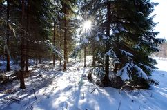 Winter landscapes in the forest. On a sunny and cold morning in Dalarna,Sweden stock photo