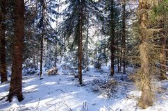 Winter landscapes in the forest. On a sunny and cold morning in Dalarna,Sweden royalty free stock photos