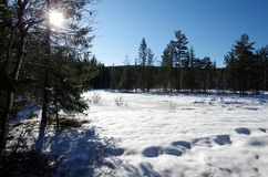 Winter landscapes in the forest. On a sunny and cold morning in Dalarna,Sweden royalty free stock images